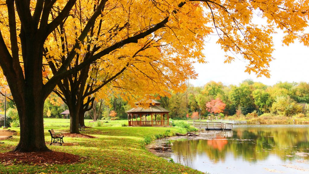 Midwest nature background with park view.